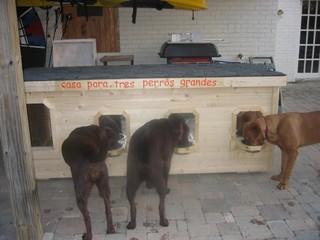 stunning big dog house plans images - best image 3d home interior
